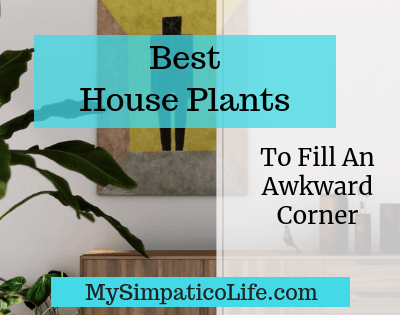 The Five Best Plants for Filling A Corner
